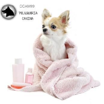 PELUQUERIA CANINA ccam99 toalla