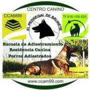 RESIDENCIA CANINA EN BRUNETE
