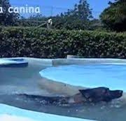 piscina-canina-ccam99