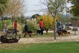 Cursos de Adiestramiento Canino CCAM99