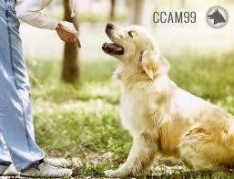 Adiestramiento Canino -Clicker Training ccam99
