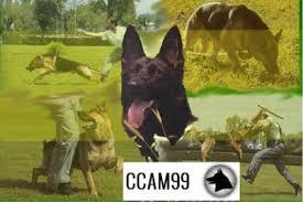 Centro canino en Madrid CCAM99