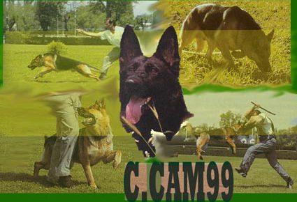 Adiestramiento Canino en Madrid CCAM99