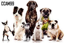 Residencia Canina CCAM99