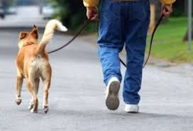 perro-paseo-correa-CCAM99